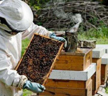 Pčelarstvo u Srbiji – unosan biznis uz značajne subvencije